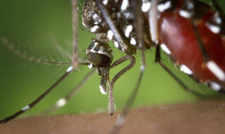 Comment éloigner les moustiques sur une terrasse ?